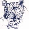 Leopard study