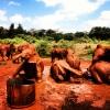 Daphne Sheldrick Baby Elephant Orphange, Kenya